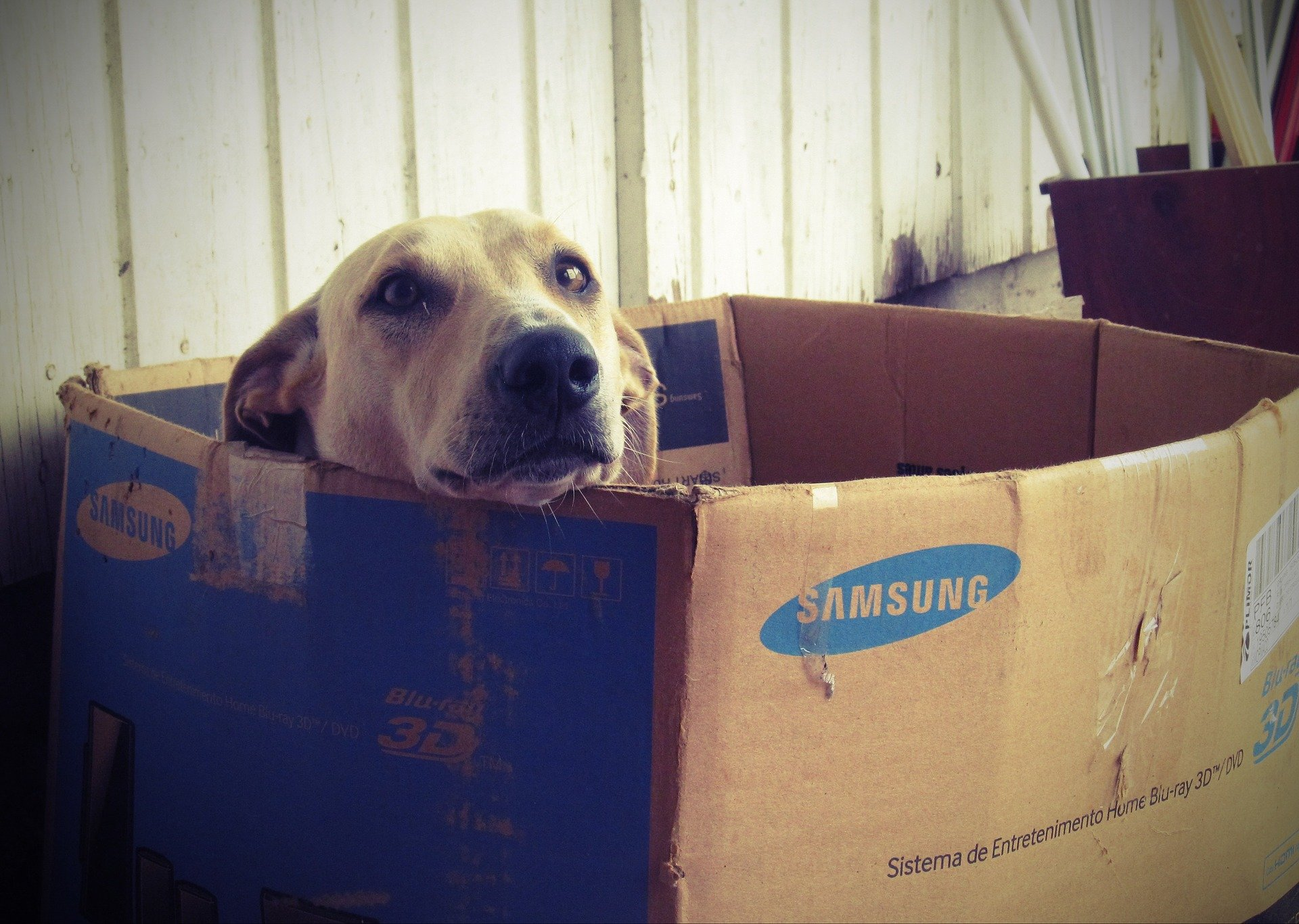 Samsung Galaxy S7: Profit steigt um 10 Prozent 2